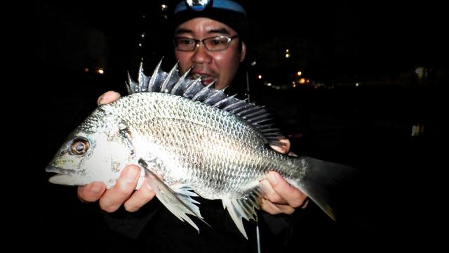 キチヌ(キビレ)釣り