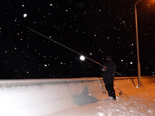 夜間、雪深い堤防でヌマガレイ釣り