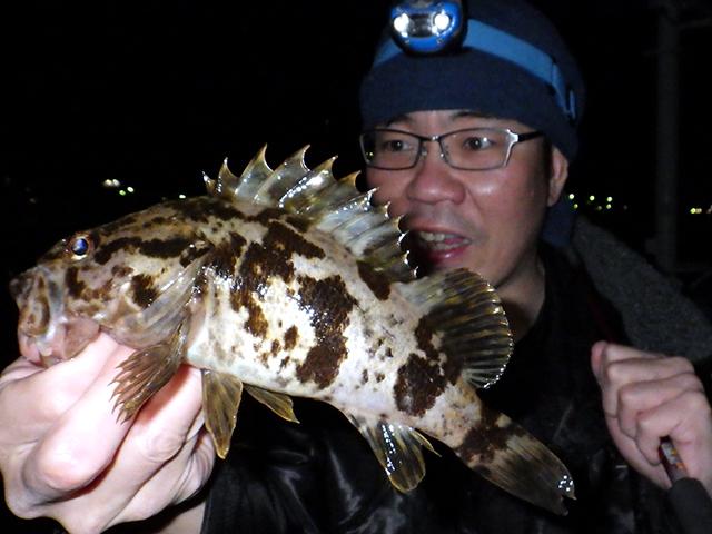 『タケノコメバル』兵庫県南あわじ市/福良漁港産~日本全国☆釣り行脚